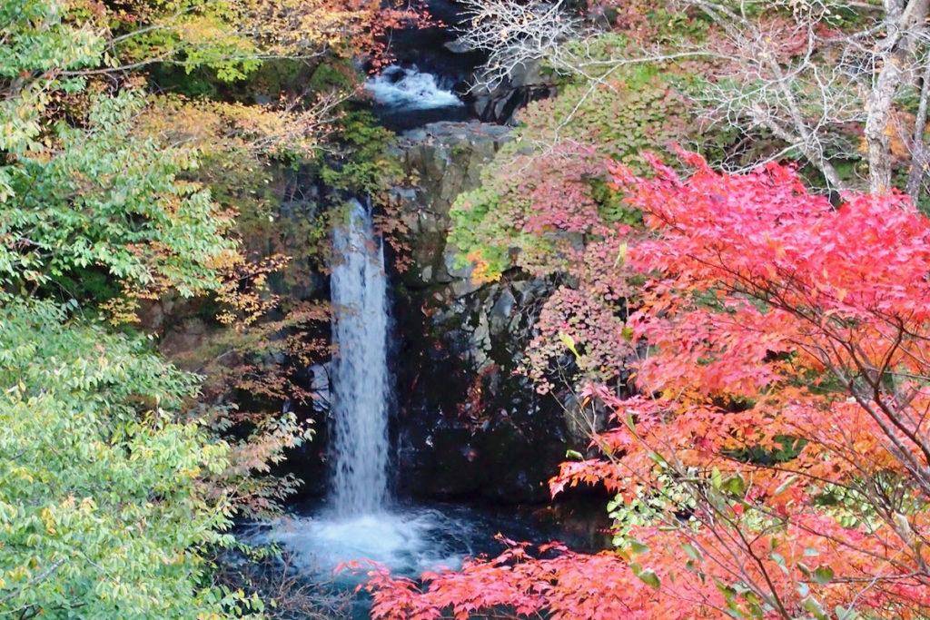 Koizumi falls
